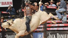 bull riding action